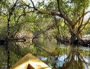 Swamp, Orlando Camp